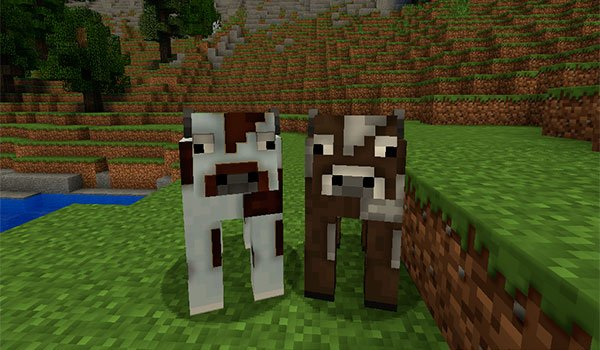 picture where we see two cows, decorated with texture pack default hd 1.16, 1.15 and 1.12.